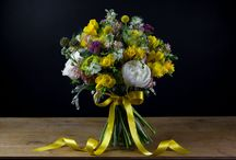 Narcissus Scottish Sisters Bouquets / ThisNarcissus Posy Collection is a more compact and ornate take on the classic Narcissus hand tied bouquet of which we have become famous for. Neaterin size but larger in stature and packed full to bursting withflowers.Named after a handfulof our most celebratedScottish Sisters each has a unique personality of itsown.