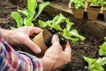 Companion planting / Helpful hints