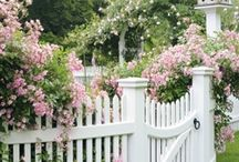 Outdoor: Fences and Gates / Fence Gate Yard