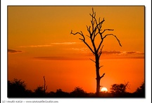 African Silhouette : Flora