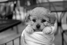 Furry friends / by Sherry Daugherty