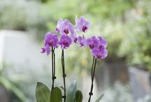 replanting orchids