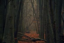 Book | Nature Forest
