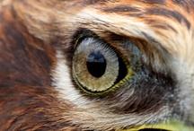 Wildlife / by Sacred Pet
