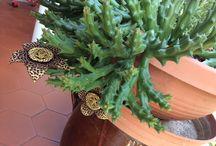 Piante e fiori / Foto belle di piante e fiori di casa mia e non solo