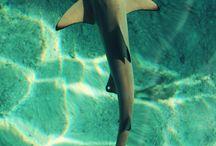 Sharks, graphics