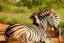 Safaris Tours