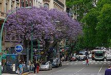 Árvores ideais para calçadas