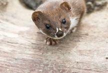 Animals - little varmites / by Dorothy S