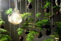 Ideas y Jardin