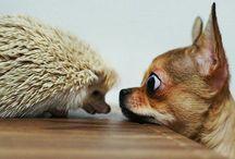 cute animal <3