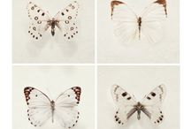 papillons / by Veronique Delporte-Anseaume