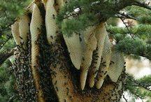 Natural bee hive / Wilder Bienenstock
