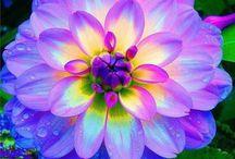Kauneimmat kukat / Maailman kauneimpia kukkia