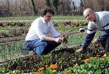 bio kertészkedésre
