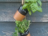 Herbs / Grow & store