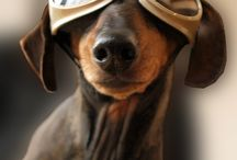 Dawgs / by K and G Cycles LLC