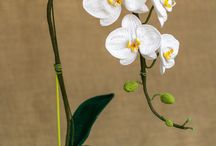orkideas