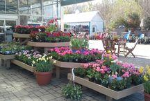 Spring Display / Our Spring displays