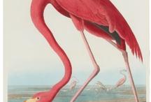 ART: John James Audubon