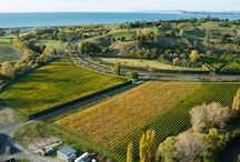 Wine / Over 80 per cent of New Zealand's plantings of Merlot, Cabernet Sauvignon and Syrah grapes are in Hawke's Bay. The region's diverse climate and range of soil types means that a wide variety of outstanding wines can be produced by the region's wineries.