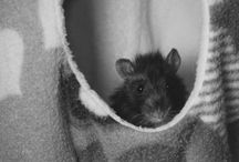 Tunas Rats / My beautiful babies