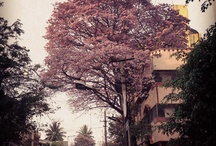 Cooke town, bangalore