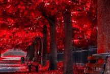 Autumn / Doğa