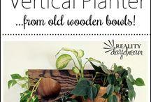 plante verticale