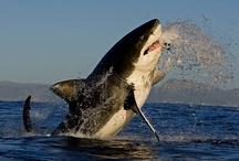 θάλασσια ζωα