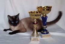 Rasowe koty