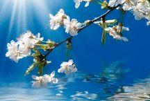 Virágok, természet