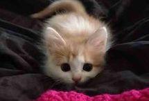 Lettle Kitten