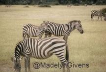 Africa Adventure