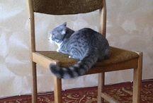 gato volteretas