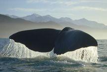 Luontoinspiraatio: Valaita