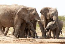 News: Africa's poaching crisis / #elephants #rhinos #pangolin #lions