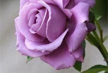 Rosas espectaculares