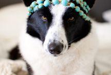 DOG LOVE / by Misti Frazier