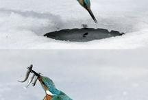 Birds/Linnut