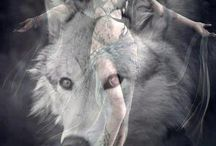 Wolf, wolves