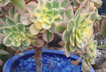 Giardino Succulenti