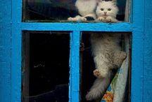 Mır mır kedicikler