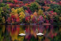 fall / by Janice Johns