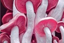Ciupetci /Gombák / Mushrooms