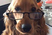 Ajanimo Yazar Dostlarımız / Yazıları ile bize katkıda bulunan hayvan severler