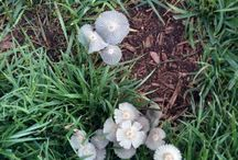 Fungi / by Halleck Horticultural