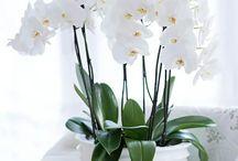flowers sharm