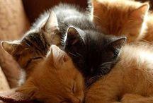 #fotos de animales / Adoro a estos encantadores seres