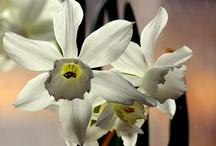 En flores de transparencia @ 2013